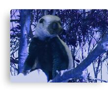 Sifaka in Blue Canvas Print