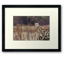 Short-eared Owl on a Stump Framed Print
