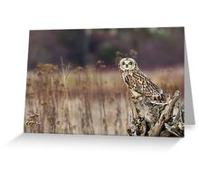 Short-eared Owl on a Stump Greeting Card