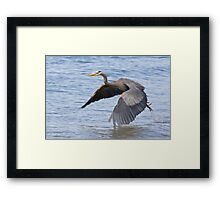 Great Blue Heron Launch Framed Print