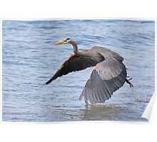 Great Blue Heron Launch Poster