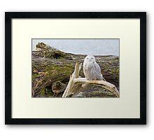 Snowy Owl Squint Framed Print