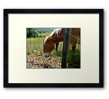Grazing Brown Beauty    ^ Framed Print