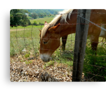 Grazing Brown Beauty    ^ Canvas Print