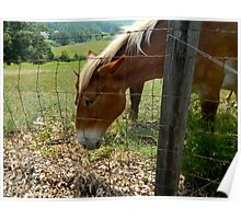 Grazing Brown Beauty    ^ Poster