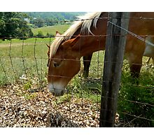 Grazing Brown Beauty    ^ Photographic Print