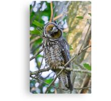 Curious Juvenile Long-eared Owl Metal Print