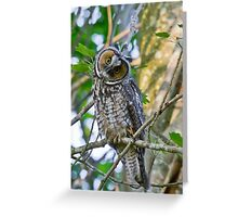 Curious Juvenile Long-eared Owl Greeting Card
