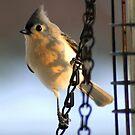 Morning Visitor....to my feeder! by Ruth Lambert