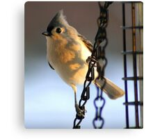 Morning Visitor....to my feeder! Canvas Print