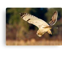 Diving Short-eared Owl Canvas Print