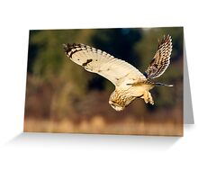 Diving Short-eared Owl Greeting Card