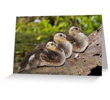 Ducklings in a Row? Greeting Card