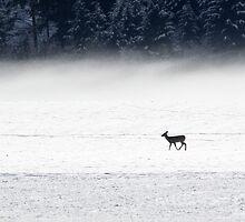 Snow & Fog by Tom Talbott