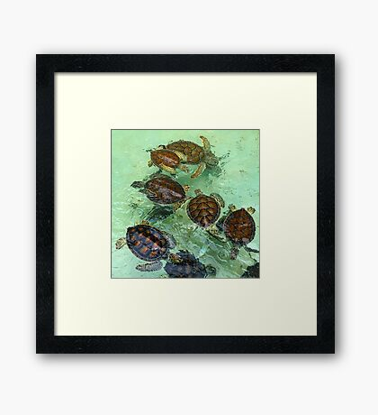 Turtles Mexico Framed Print