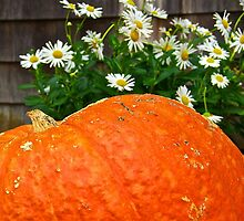 Giant Pumpkin and Daisies by John Butler