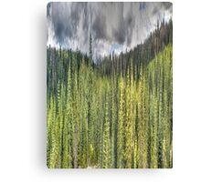 National Forest Cosumnes River 2 Canvas Print