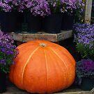 Pumpkin with Purple by Karen Checca