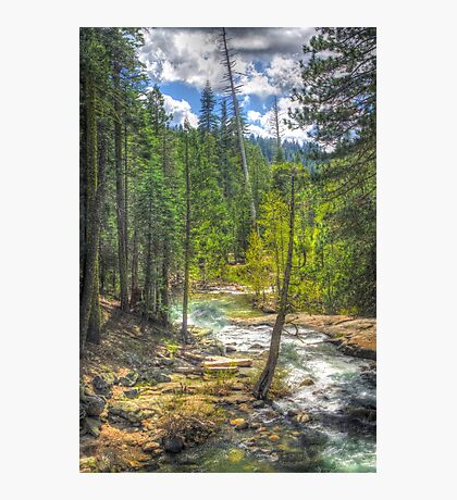 Forest at Cosumnes River (Middle Fork)  Photographic Print