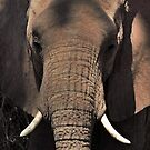 Head on in Kenya 2014 by maureenclark