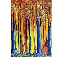 In the shadow of a poplar tree Photographic Print