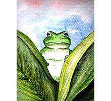 Peeping Frog  Photographic Print