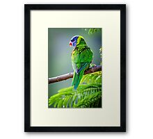 Catchin' Rays... Framed Print