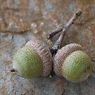 Acorn Twins  by clizzio