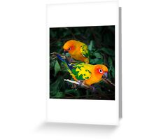 Two sun conures parrots are sitting on a tree branch Greeting Card