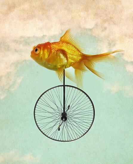 unicycle goldfish by vinpez