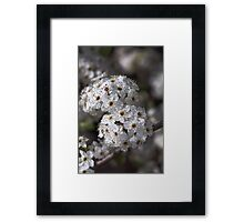 Displaying Spring Framed Print