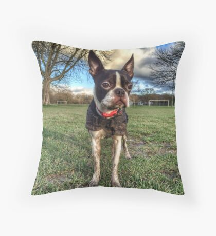 Portrait of a muddy dog Throw Pillow