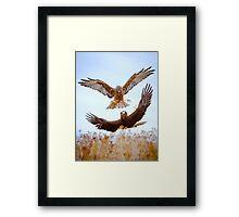 Hawk Fight Framed Print