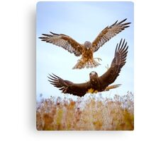 Hawk Fight Canvas Print