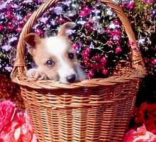 Jack in the basket by Kawka