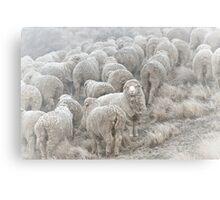 Frosty Sheep Canvas Print