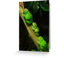Green tree frogs Greeting Card