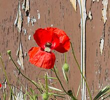 abandoned house with poppies by spetenfia