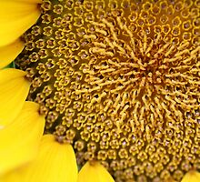 Sunflower Patterns by StonedOgraphy
