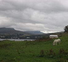 Portree Bay & Wild Horses, Skye, Scotland by MagsWilliamson