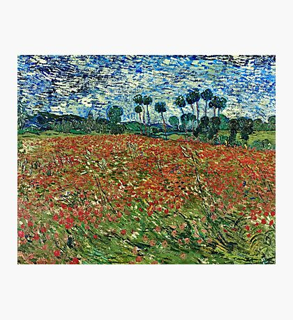 Vincent Van Gogh - Poppy Field 1890  Photographic Print