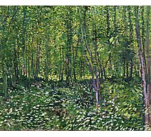 Vincent Van Gogh - Trees And Undergrowth, July 1887 - 1887  Photographic Print