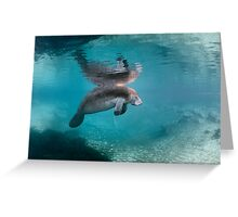 Pool of Dreams Greeting Card