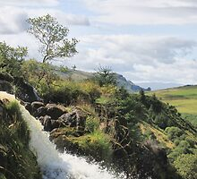 Loup of Fintry by Cat Perkinton