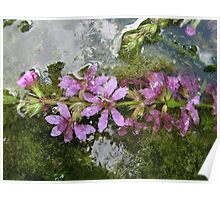 Flowers and reflections in water Poster