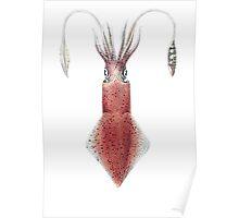 Mollusques Vivants et Fossiles. Poster