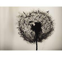 Dandelion birds (V2) Photographic Print