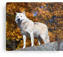 Loup Arctique Metal Print