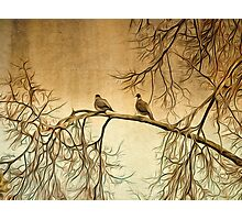 Out On A Limb Photographic Print
