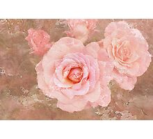 Candy roses Photographic Print